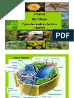 Morfologia Vegetal - 2010 - Profa Estela