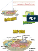 celula didactica
