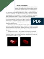 Trabajo de Biologia LA MITOCONDRIA