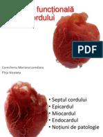 Anatomia Functionala- Cord