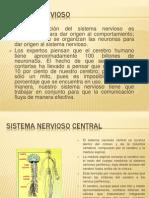Sistema Nervioso Diapositivas