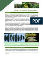 CDA 2004 Abejas Cucurbitaceae