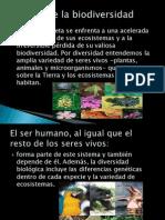 Perdida de La Biodiversidad DESARROLLO 1