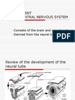 Development of the Cns