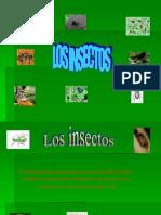 insectos2