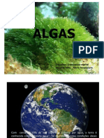 Apresentação Algas I