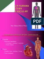 Sesion 06 - Aparato Cardiovascular Corazon Excitacion Con