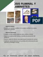 Acidosis Ruminal y Laministes