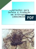 Fotos Aracnídeos01