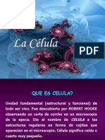 lacelula-090713195430-phpapp02