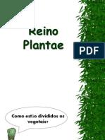 7º ANO  - REINO PLANTAE  2012