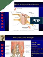 Anatomia Topografica - Membros 2