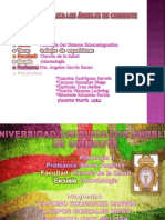 Patologia Grupal Expos 3 Unidad
