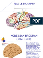 6635670 Areas de Brodmann