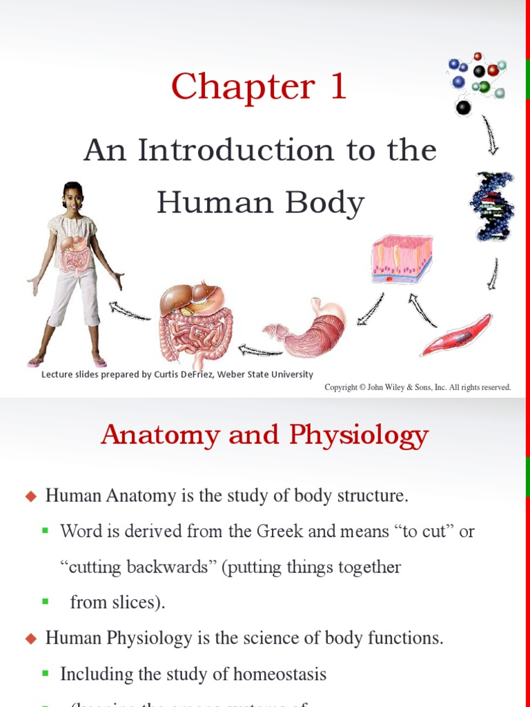 Principles of Anatomy and Physiology Chapter 1 (PPT) | Anatomical ...