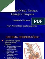 Cavidade Nasal, Faringe, Laringe e Traqueia 2