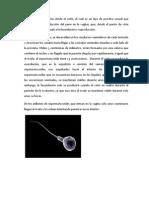 concepción y métodos anticonceptivos