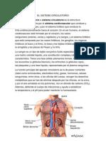 El Sistems Circulatorio