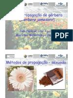 Aula 11 Micropropagacao - Exemplo Gerbera Copy