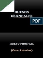 Huesos Frontal