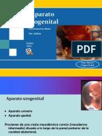 Aparato Urogenital FINAL (1)