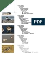 Aves en La Bahia Puno