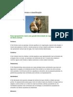 Principais filos animais e classificação