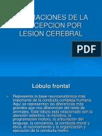Alteraciones de La Percepcion Por Lesion Cerebral