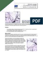 Stress corrosion.pdf