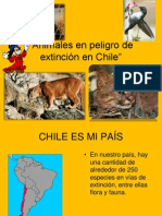 ppt-animalesenpeligrodeextincinenchile-120615000113-phpapp02