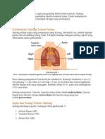 Jantung - Struktur Dan Fungsi