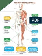 Mapa Medicamentos Anatomia.ppt