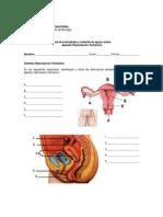 Bio 7 Actividades Aparato Reproductor Femenino