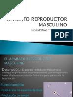 Aparato+Reproductor+Masculino