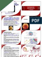 embriologauphteora03-120827190601-phpapp01