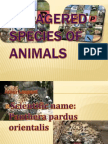 Endagered Species of Animals