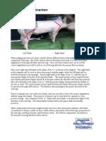 Judging_Swine_Structure_Part_1.pdf