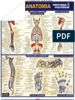 Anatomia Humana - Imagens Explicativas - Resumo - Maria Ignez t. Franca - Banner