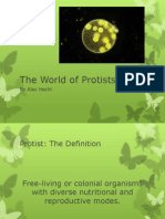 The World of Protists