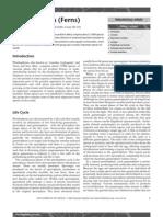 Pteridophytes(Ferns).pdf