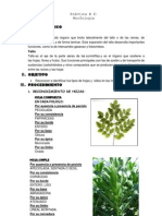 Botanica[1]