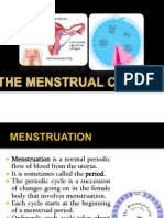 Menstrual Cyle and Pregnancy