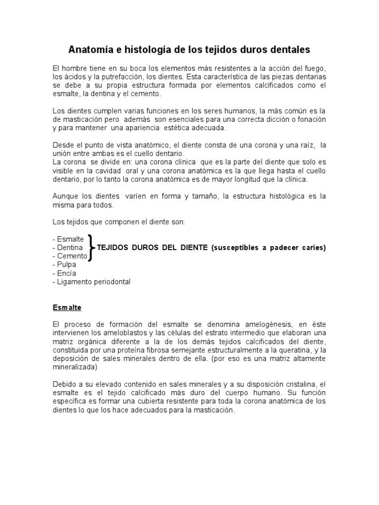 Asombroso Definir La Anatomía Histológico Modelo - Imágenes de ...