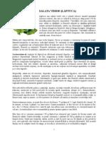 43417286 Salata Verde Laptuca Un Drog Legal