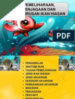 Assignment Ikan Hiasan