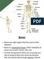 Bone Diseases 1