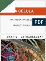 1. LA CÉLULA m. ec., aparato Golgi.pptx