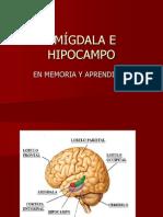 AMÍGDALA E HIPOCAMPO