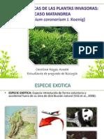 Caracteristicas de Las Plantas Invasoras