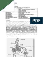 Replicación de DNA en procariontes
